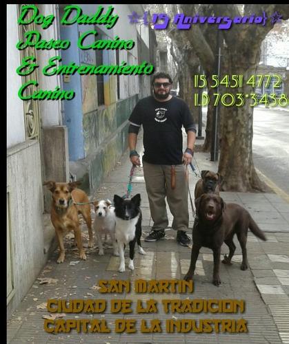 dog daddy // paseo canino urbano // disciplina canina básica