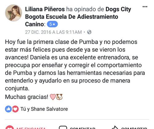 dogs city adiestramiento canino