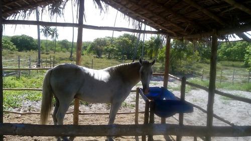 dois lindos cavalos