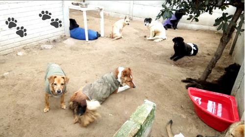 doná para gastos veterinarios - refugio las renatas -