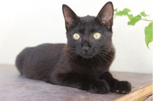 dos gatas hermosas para adopcion
