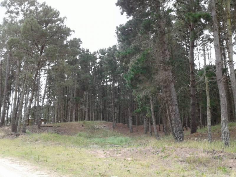 dos terrenos juntos en venta, zona senderos. arbolado y excelente entorno!
