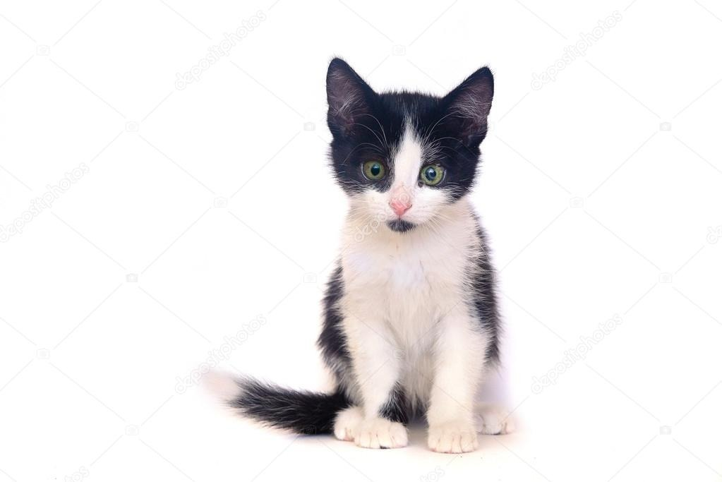 Doy En Adopcion Hermosos Gatitos En Color Blanco Y Negro - S/ 1,00 ...