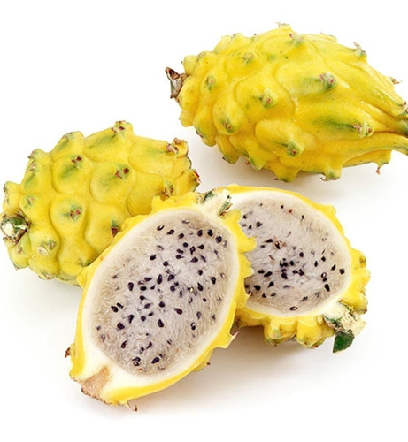 dragon fruit mudas de pitaya amarela colombiana kit c/6