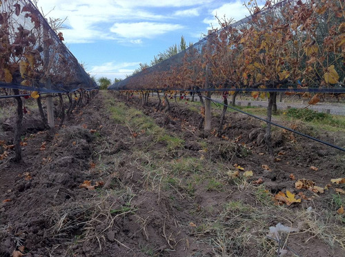 dueño vende 50 has riego viñedos