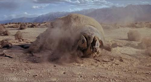 dvd terror en el desierto ( tremors ) 1990 - ron underwood /