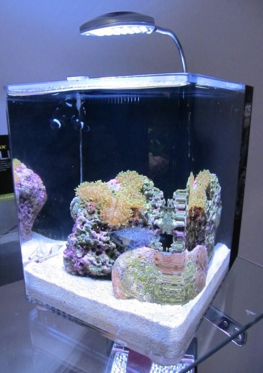 Dymax aragonita para acuario marino en mercado for Acuario marino precio