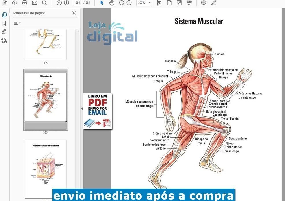 Dorable Anatomía Básica Y Fisiología De Martini Imagen - Anatomía y ...