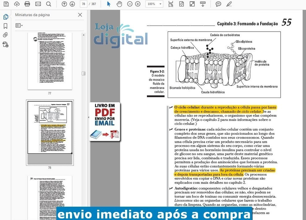 Atractivo Anatomía Fisiología Visual Y Pdf Ilustración - Anatomía de ...