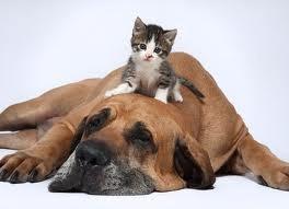 ecografía veterinaria a domicilio