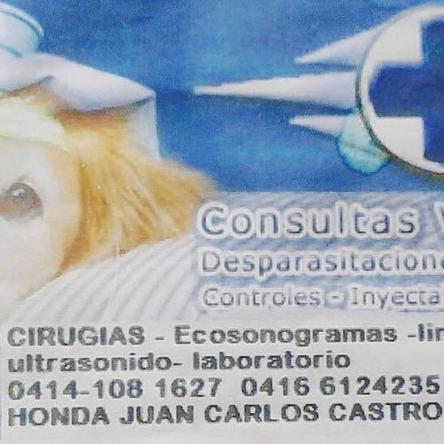 ecografias consultas laboratorio servicio veterinario
