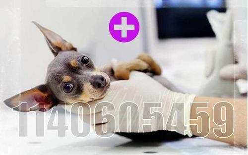 ecografías veterinarias en domicilio -zona sur-