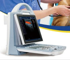 ecografo kaixin full digitsl color doppler con 4 transductor