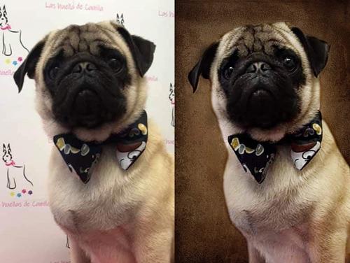 edición de retratos caninos