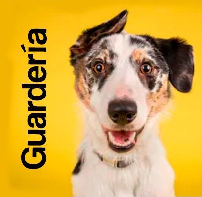 educacion en casa y adiestramiento de perros y cachorros