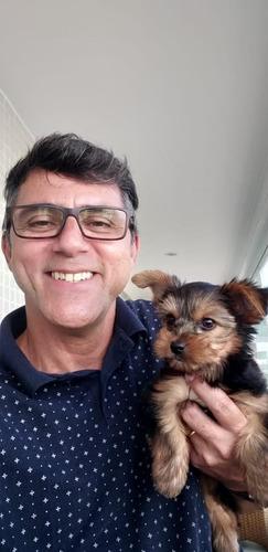 educação e adestramento para cães de todas as raças e idades
