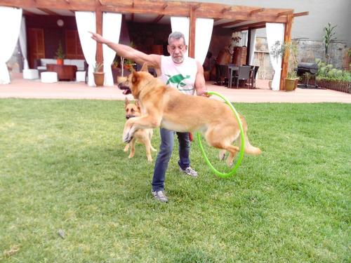 educador, adiestrador y entrenador canino a domicilio