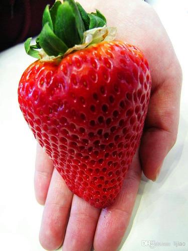 egrow 100pcs semillas de fresa roja gigante heirloom súper j