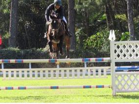 03cfdb5e4 Egua De Salto Brasileiro De Hipismo Itapuã Cavalo Equitação