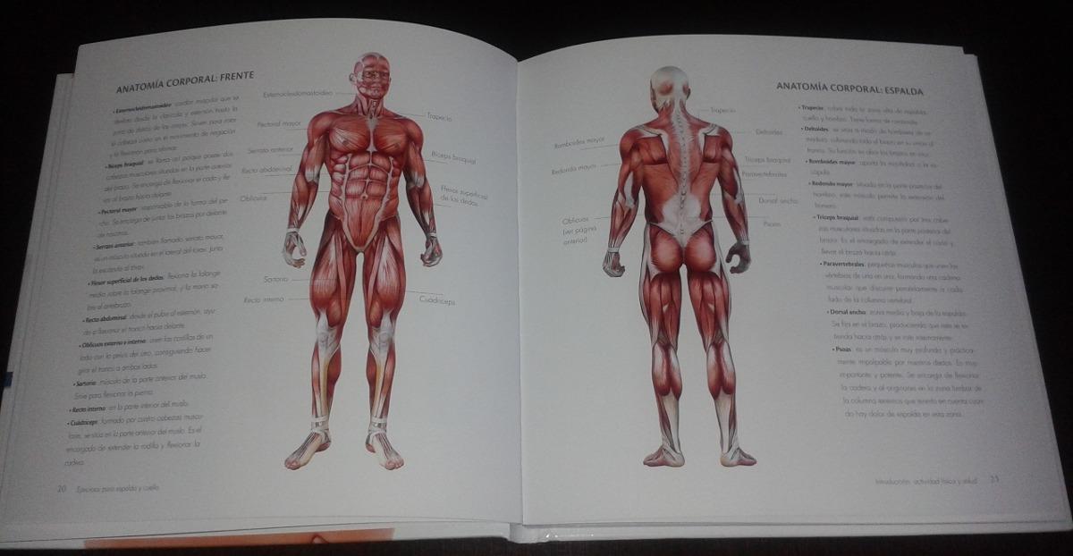 Moderno Anatomía Espalda Y Ejercicios Cresta - Anatomía de Las ...