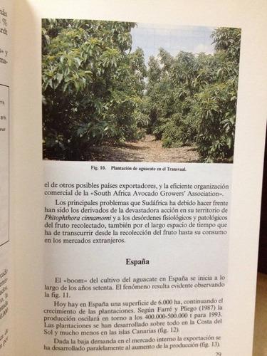 el aguacate. f. calabrese