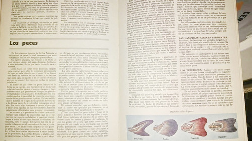 el arcon consultora enciclopedia tematica ilustrada completa