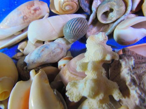 el arcon gran lote de caracoles marinos de coleccion 14067