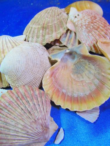 el arcon lote de 23 caracoles marinos de coleccion 14065