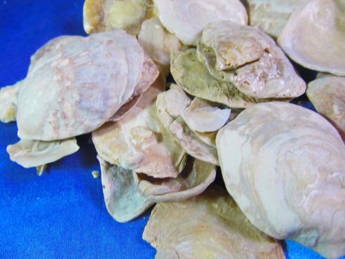 el arcon lote de 35 caracoles marinos de coleccion 14056