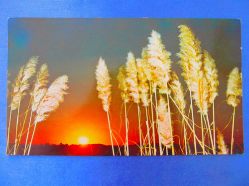 el arcon tarjeta postal mar del plata cortaderas 431 11