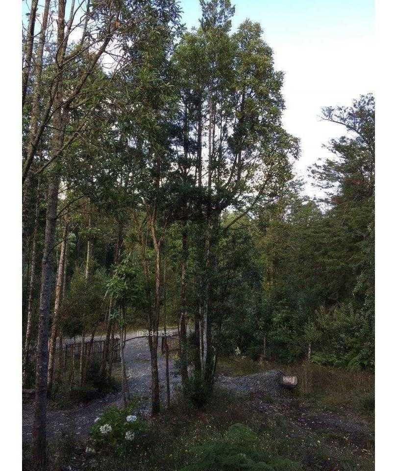 el bosque s / n