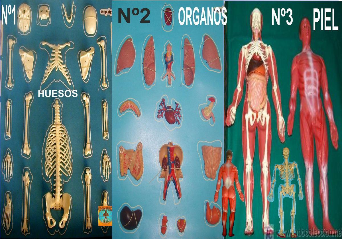 El Cuerpo Humano Anatomia Profesional Medicina Para Armar - $ 1.200 ...