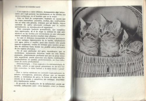 el cuidado de nuestro gato / armando f. draghi