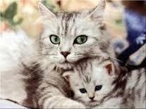 el encantador de gatos promo3x2(a su correo)