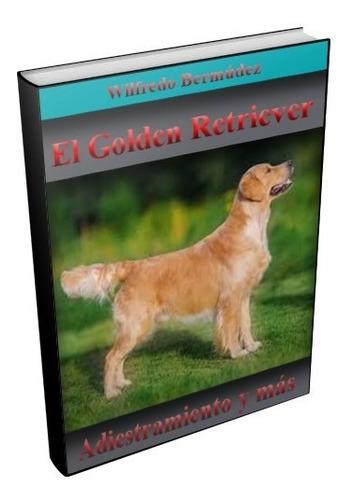 el golden retriever adiestramiento y mas