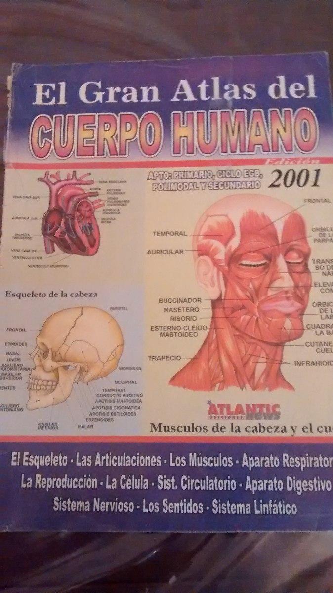 Famoso Esqueleto Cuerpo Humano Marcado Imagen - Imágenes de Anatomía ...