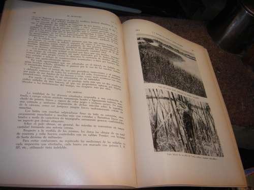 el hornero revista de la sociedad ornitologica del plata