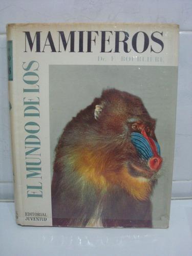 el mundo de los mamiferos - dr. bourleire