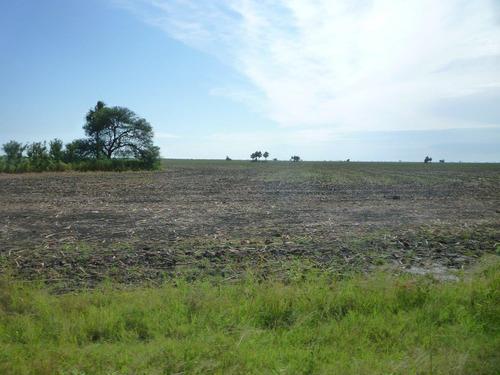el palmar  2000 has agricolas y 750 ganaderas en santa fé, a 600 kms de rosario.
