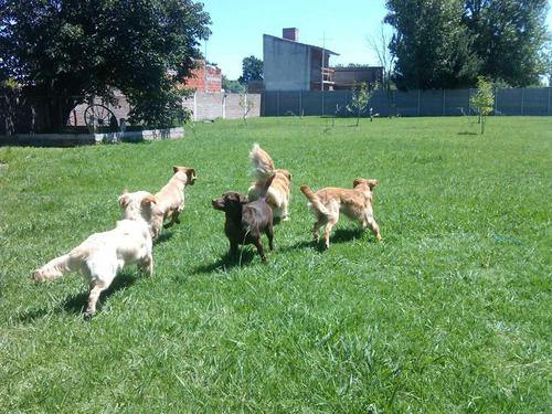el refugio guarderia canina traslado - 1121860434