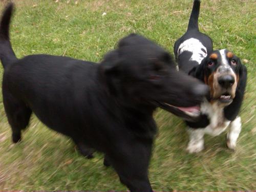 el refugio pensionado - guarderia canina traslado - trámites