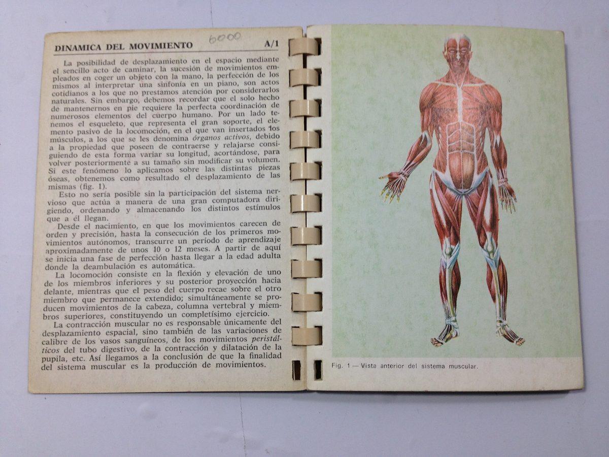Contemporáneo Hembra Diagrama De Sistema Muscular Foto - Imágenes de ...
