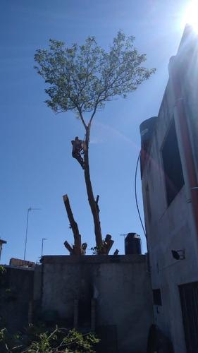 el trebol podas de árboles y extracciónes de  raíz