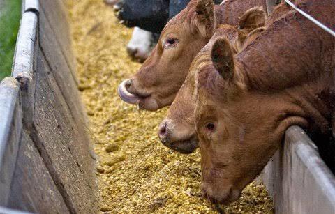 elaboración de dietas para animales en producción
