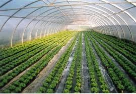 elaboración:proyectos agropecuarios, agrícolas y obra civil.