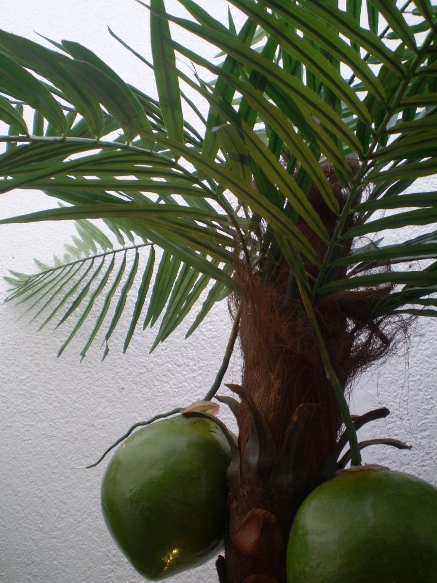 Elegantes macetas y plantas decorativas daa 1 for Plantas decorativas