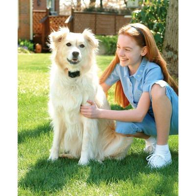 elimina ladridos de tu perro collar 100% seguro garantizado