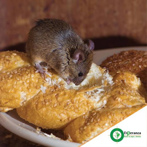 eliminamos ratas, ratones y roedores