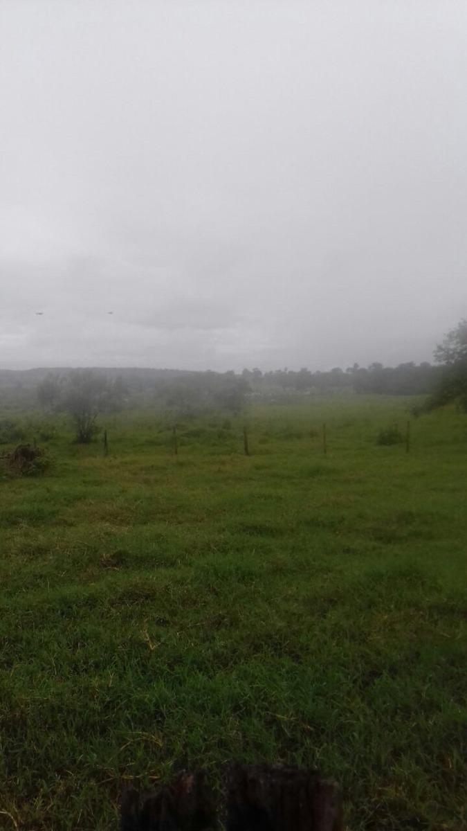 em campina verde