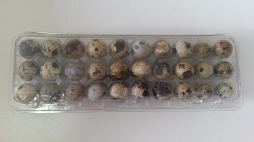 embalagem p/ 30 ovos de codorna 200 unid frete grátis